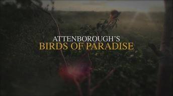 Attenborough's Birds of Paradise Promo