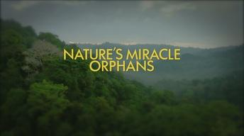 Nature's Miracle Orphans Promo