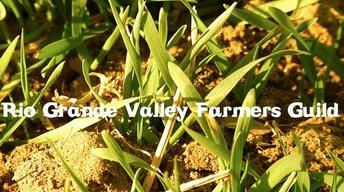 Rio Grande Valley Farmers Guild