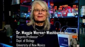 Maggie Werner-Washburne