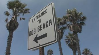 Dog Beach Funding