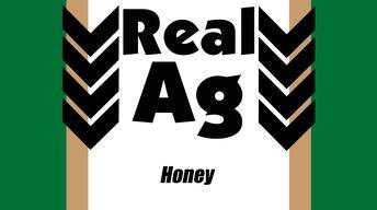 RealAg Honey (Ep 603)