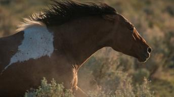 Mustangs of Oregon