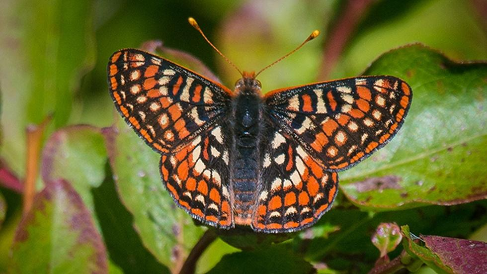 Butterfly Watching image
