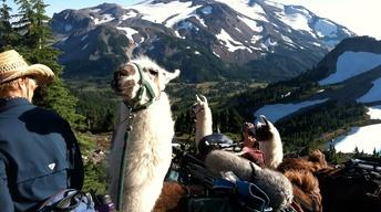 Llama Backpacking