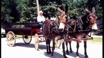 History and Contributions of the Missouri Mule