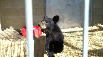 Black Bears, An Osprey, and Bats