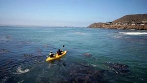 Kayaks and Kumiai