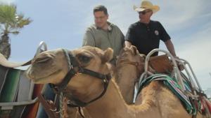 Camels, Jetpacks, and Laja