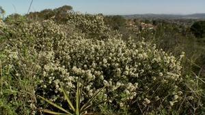 California Native Grown