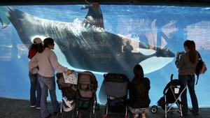 Roundtable On SeaWorld Changes, Dumanis Decision