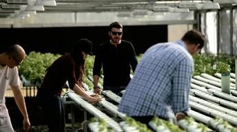Archi's Acres: Helping Veterans Grow