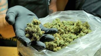The Kaepernick Effect, Cannabis at a Crossroads, Prop 64