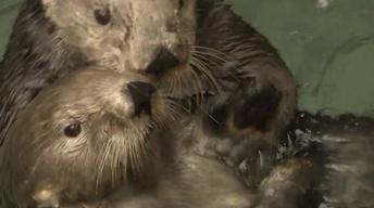 Otters v. Climate Change