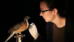 Reawakening Extinct Species