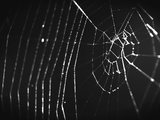 QUEST | Secrets of the Spider Web