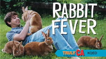 Rabbit Fever | Truly CA
