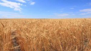 The Journey: Wheat into Flour - Part 1