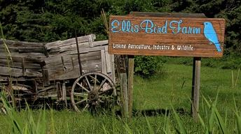 ELLIS BIRD FARM