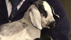 State Fair animals, Mark Seeley weather, political reporter