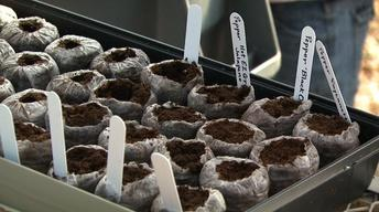 Greenhouse Seed Planting