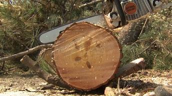 Chainsaw Safety and Small Tree Removal