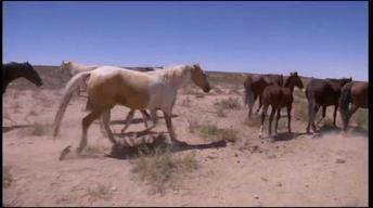 Wild Horses of the West Preview
