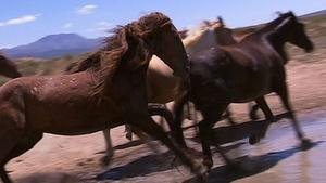 Wild Horses of the West - Full Program