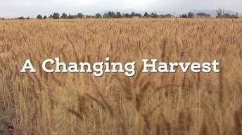 A Changing Harvest Full Episode