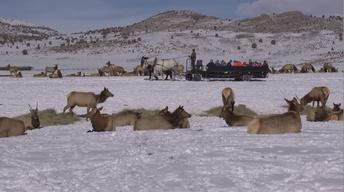 Hardware Ranch: Elk in Winter - Utah Bucket List 2