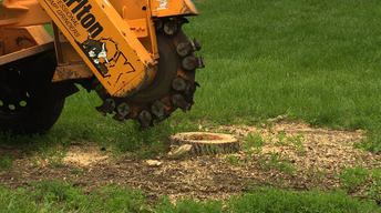 Grinding Stumps, Trimming Trees for Structure