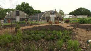 Children's Gardening Programs