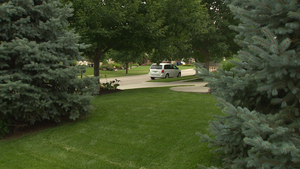 Lawn Renovation & Onions