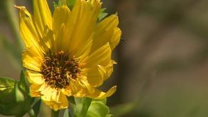 Local Artist's Natural Landscape & Raising Nebraska Prairie