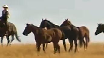 Cowboys on the Open Range