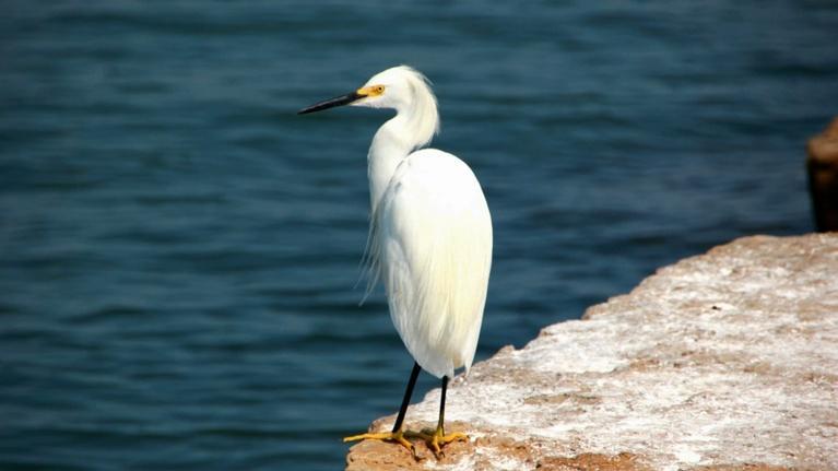 Texas Gulf Coast: A Wildlife Paradise