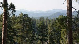 Black Hills Metamorphosis