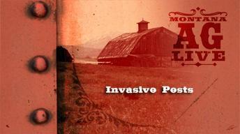 Invasive Pests (No. 3707)