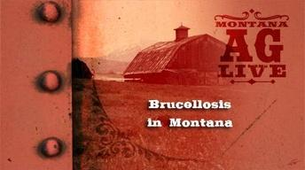 Brucellosis in Montana (No. 3205)