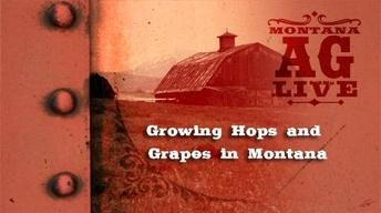 Growing Hops And Grapes in Montana (No. 3309)