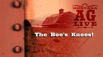 The Bee's Knee's (No. 3904)