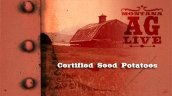 Certified Seed Potatoes (No. 3706)