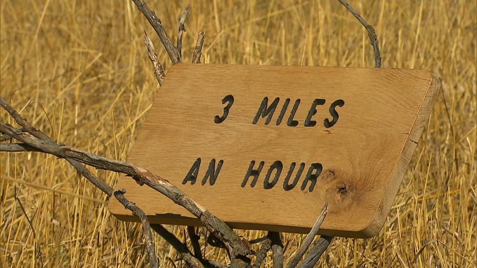3 Miles An Hour image