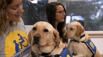 Healing Beyond Medicine Extra: Service Dog Training
