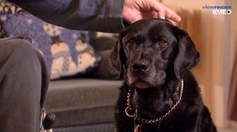 Healing Beyond Medicine - Service Dogs
