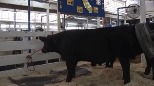 Big Fresno Fair: Sanger FFA