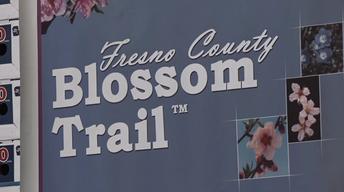 Blossom Trail 2015