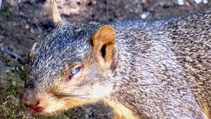 Rocky Squirrel Takes a Nap