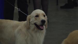 Sun Maid Kennel Club Dog Show 2017