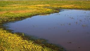 Tulare Co. Treasures: The Herbert Wetland Prairie Preserve